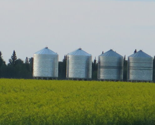 Graineries in canola field just north of Zenon Park Saskatchewan